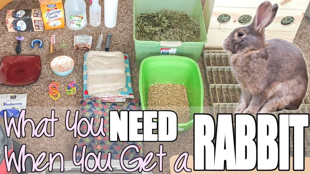 What to Buy for a Rabbit