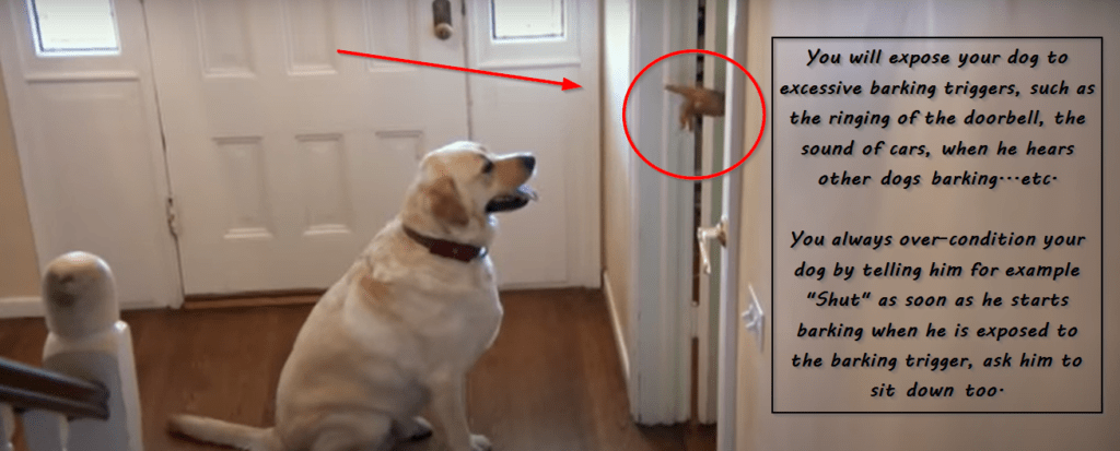 do dogs stop barking and how to training them to if they won't stop barking by themselves ?