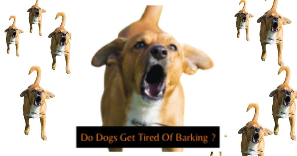 do dogs really get tired of barking or never did ??