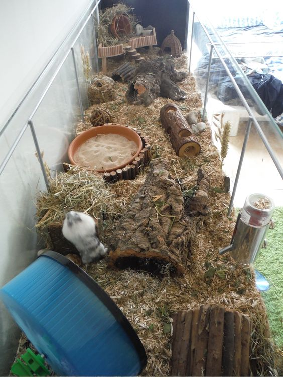 what to buy for a new hamster ?