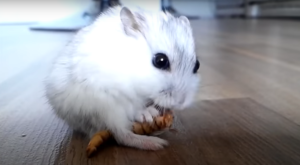 this is what hamsters eat