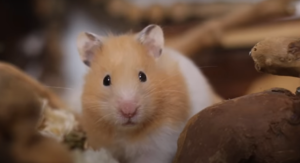 are hamsters sensitive to loud noises ?