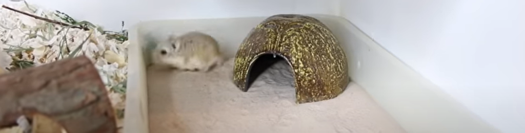 How do hamsters clean themselves ?