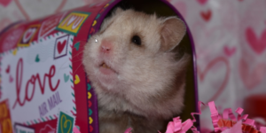 How to pich the right hamster ?
