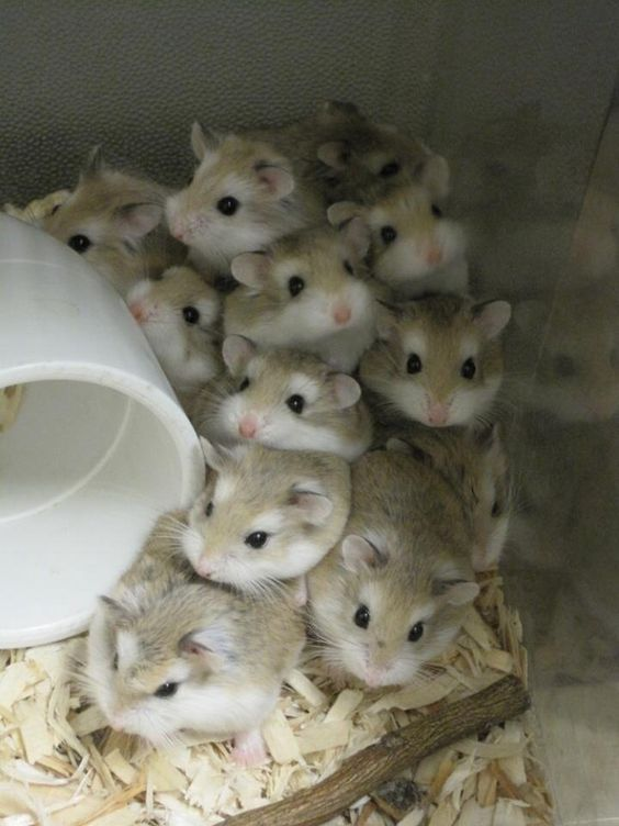 How to pick a healthy hamster when buying one ?