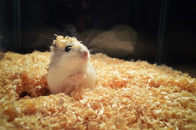 hamster bedding all you need to know