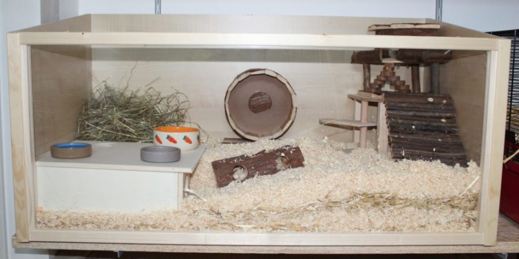 What Do New Hamsters Need