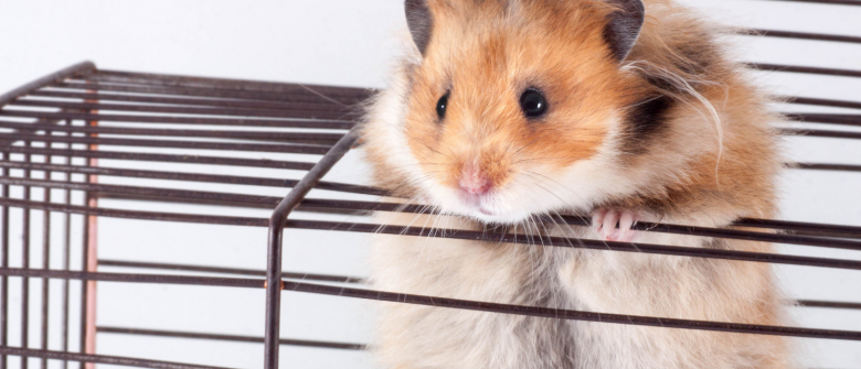 how to choose a healthy hamster ?