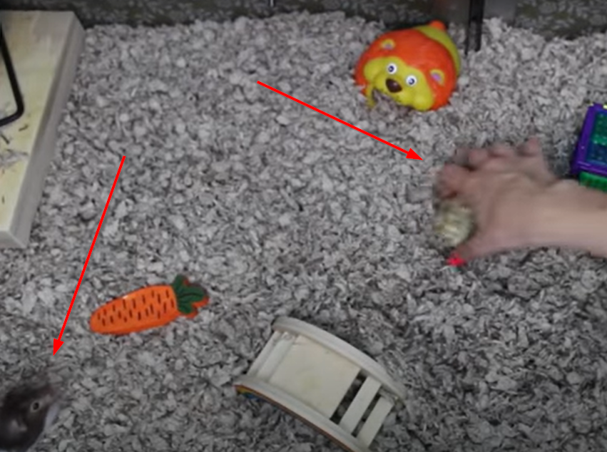taming a hamster to not biting