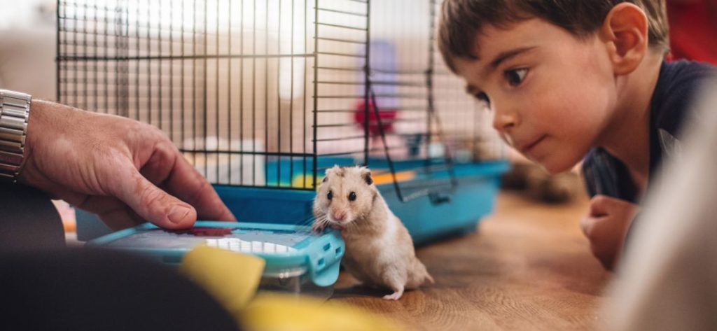 Can Hamsters Carry Diseases ?