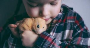 can hamsters transmit diseases to humans