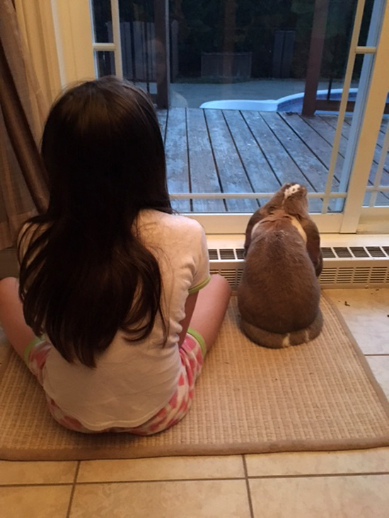 is a bunny the right pet for my family