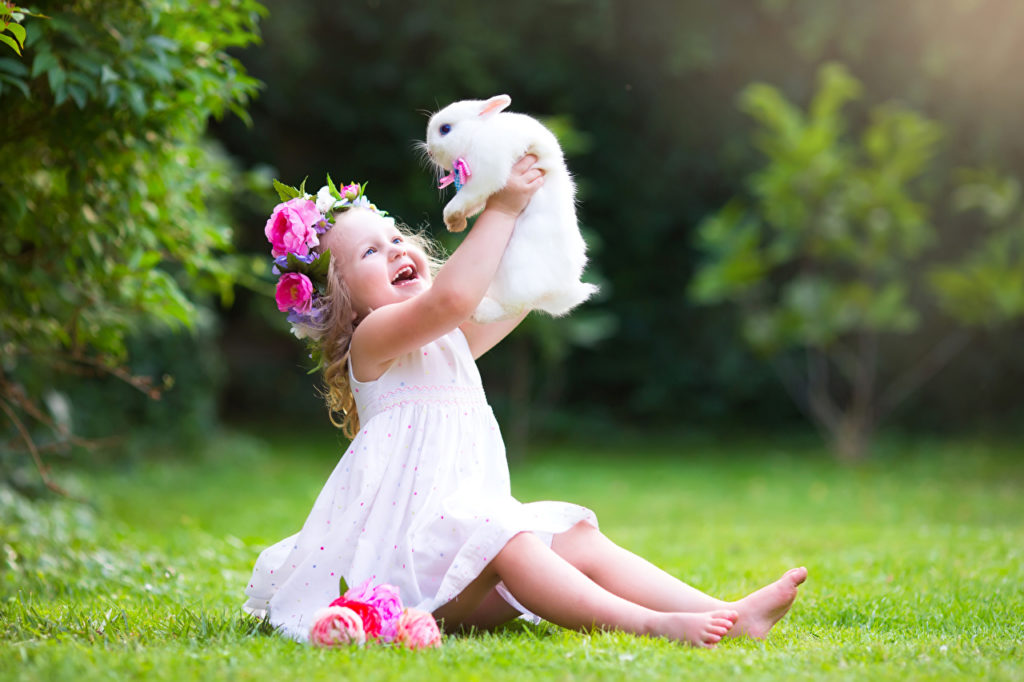 Is a pet rabbit the right choice for me and my family ?