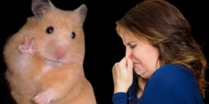 what to do when a hamster smells bad ?