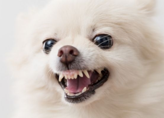 dog barking complete solution ( famillypet home page)