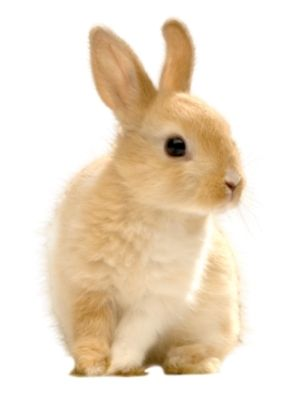 pet rabbits on famillypet