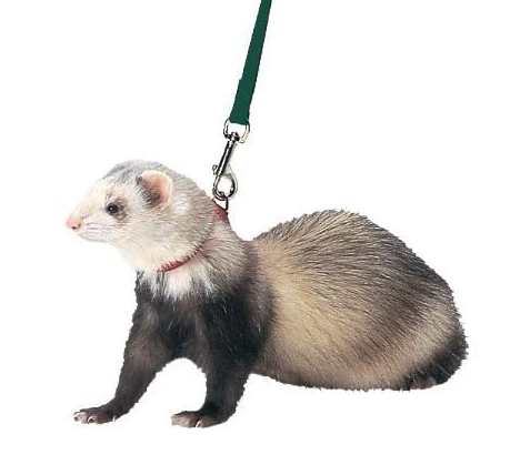 Best harness & leash for ferrets