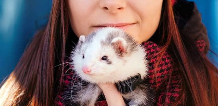 why do ferrets smell & how to get them smell less ?