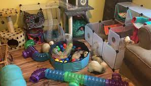 what to get for a new ferret ?
