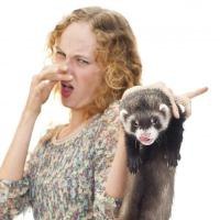 how to get rid of my ferrets odor ?