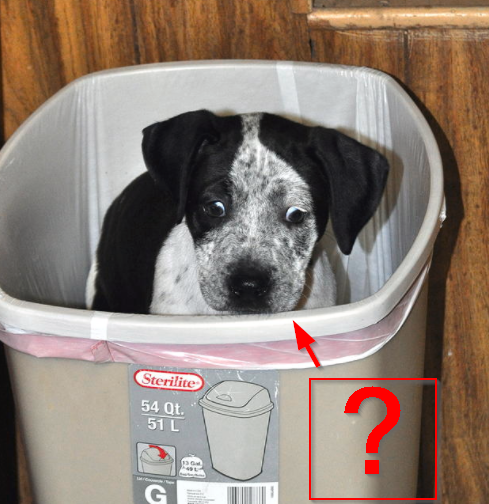 Discipline a dog that eats from a trash can